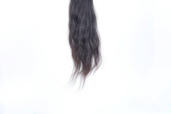 Culík Řeckých vlasů